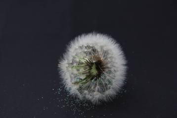 round flower