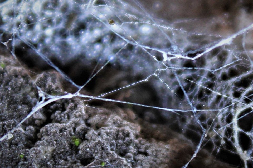 spider web and a rock